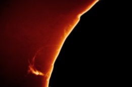 Loop prominence in Calcium K